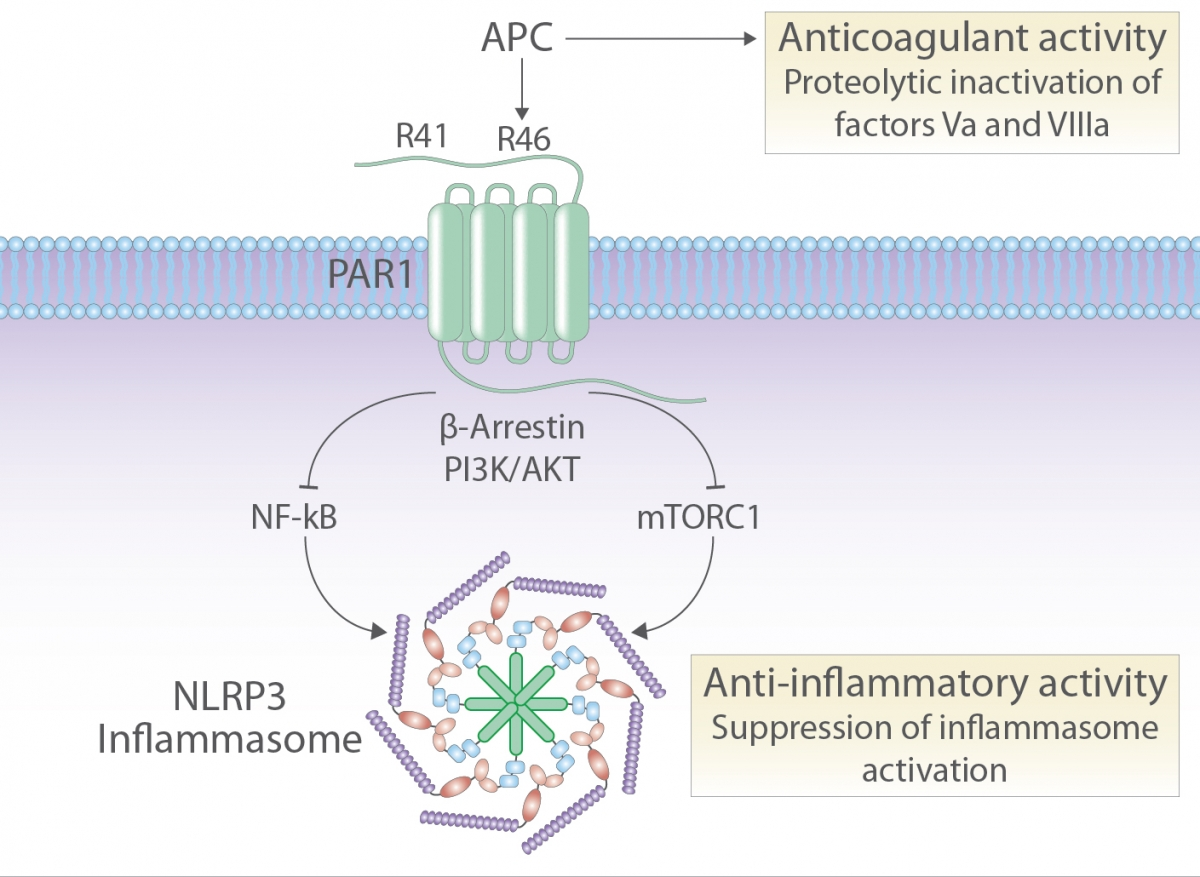 On PAR with aPC to target inflammasomes